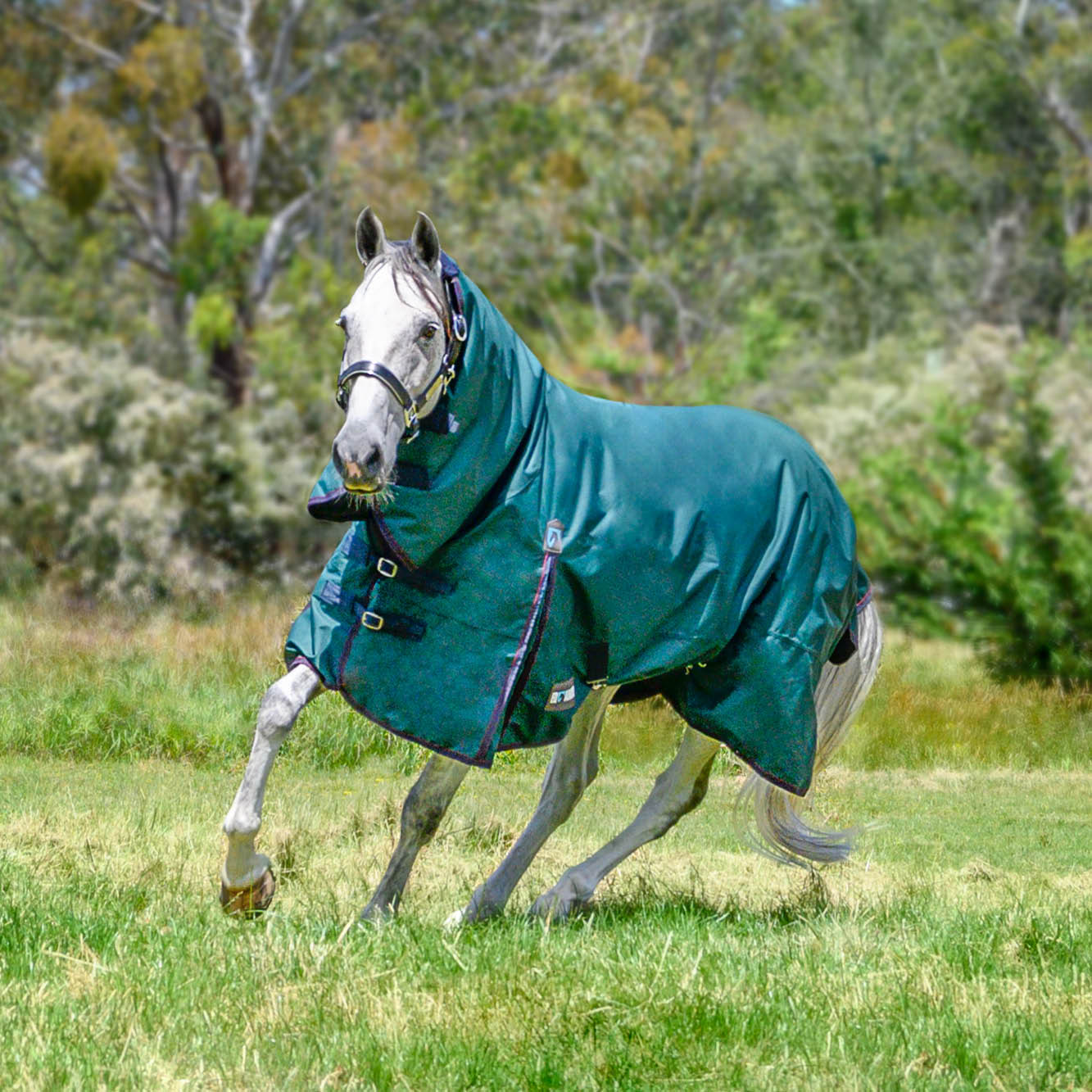 Horse Rugs Perfect For Autumn